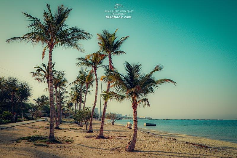 ساحل درختان نارگیل