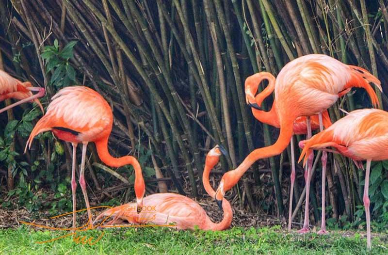 باغ پرندگان تفریحی برای کودکان در کیش